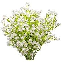 White flower blooms