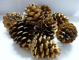 Pine cones gold spray-painted