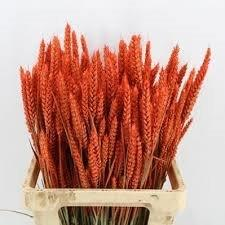 Coloured Wheat bunches